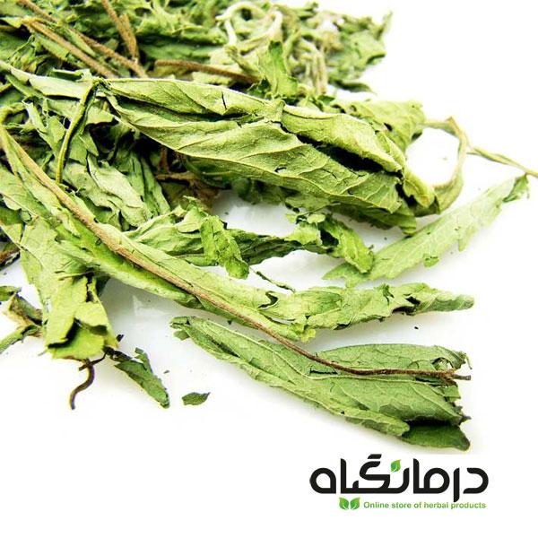 برگ خشک استویا Stevia dried leaf