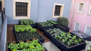 باغبانی و تاثیر آن بر شادی روح و روان