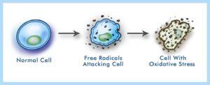 رادیکال های آزاد و آنتی اکسیدان ها