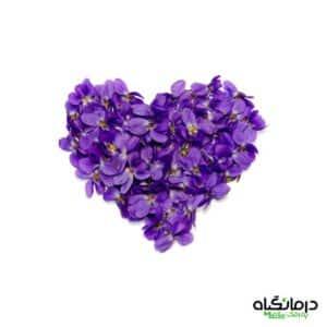گل بنفشه معطر Viola odorata