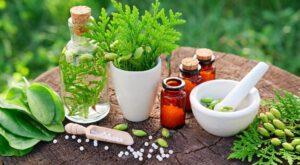 درمان گیاهی هپاتیت سی
