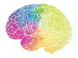 تاثیر پیوراریا میریفیکا بر سلامت مغز